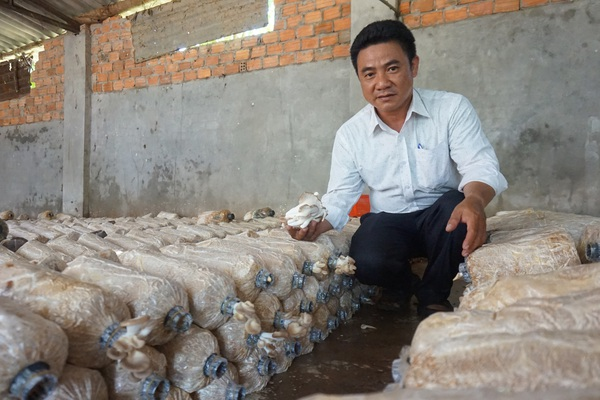 """Đà Nẵng: Kỹ sư """"hái"""" vài trăm triệu mỗi năm nhờ trồng thứ nấm """"cực phẩm chân ngắn"""""""