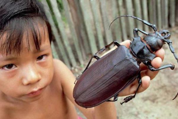 """10 """"nhân vật tầm cỡ"""" được coi là những kẻ khổng lồ trong giới côn trùng"""
