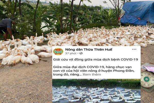 """Giá gia cầm hôm nay 7/8: Ảnh hưởng Covid-19, nông dân lên mạng kêu gọi """"giải cứu"""" gà, vịt"""