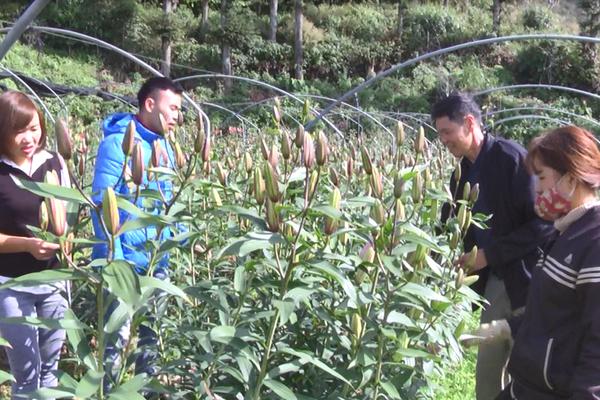 """Lào Cai: Lão nông """"bỏ túi"""" 2 tỷ đồng/năm từ mô hình trồng hoa công nghệ cao"""