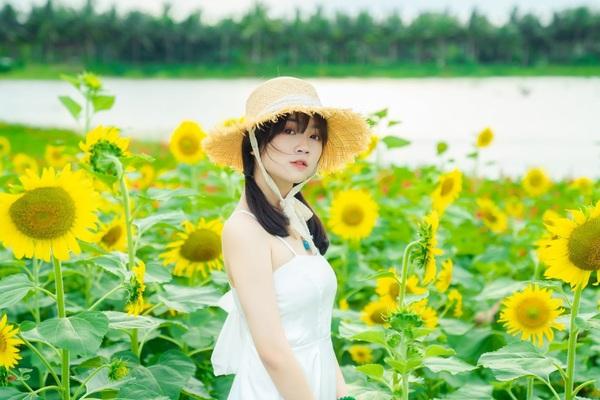 Đồi hoa mặt trời Ecopark khoe sắc đón thu sang