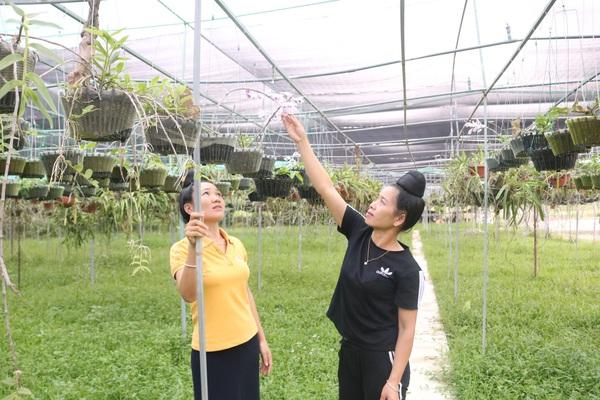 """Vườn lan """"khủng"""" trên 6.000 giò của cô gái Thái ở Sơn La, ai nhìn cũng choáng"""