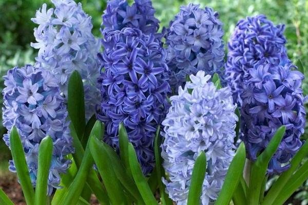 5 loại cây, hoa phá vỡ phong thủy, đặt trong nhà sẽ khiến gia chủ lục đục, vận thế sa sút