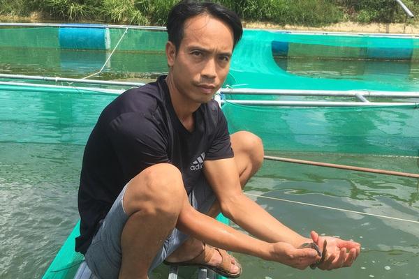 """Thanh Hóa: Nuôi loài cá lưng đầy gai nhọn ví như """"nhân sâm nước"""", bán đắt thương lái vẫn giành nhau mua"""
