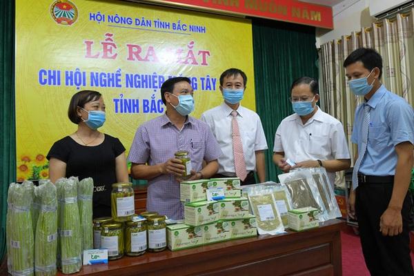 """Trồng """"rau hoàng đế"""", nông dân Bắc Ninh liên kết thành lập chi hội nghề nghiệp măng tây xanh"""