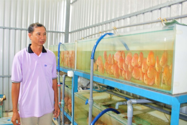 Long An: Một ông nông dân nuôi loài cá cảnh đẹp mê li được Thủ tướng Chính phủ tặng Bằng khen