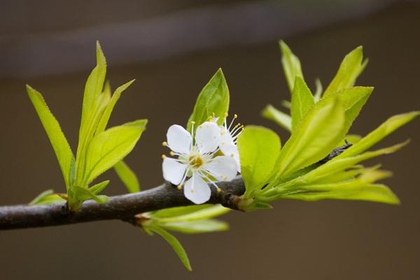 Mùa xuân sang, 4 điềm báo dự báo tin vui gõ cửa, phú quý đến nhà