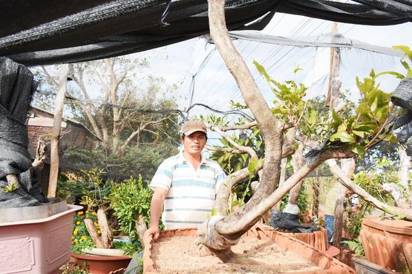 Đáng ngại: Đào 1 cây mai rừng khủng bán 45 triệu, nhoáng cái đã có người mua lại giá 85 triệu
