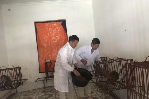 Quảng Ninh: Ra đảo xem nuôi loài khỉ đang được tiêm thử nghiệm vaccine COVID-19 của Việt Nam