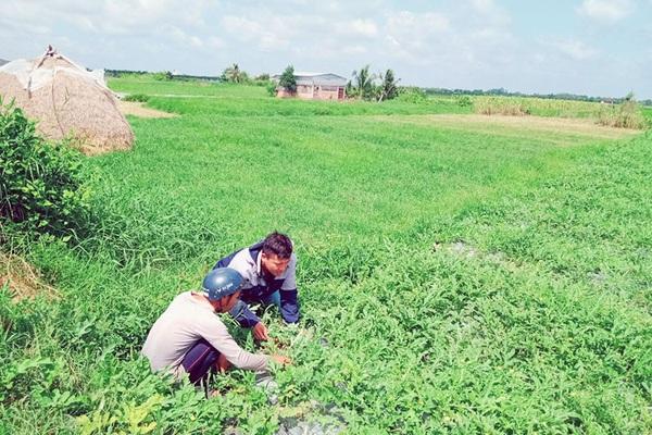 Bến Tre: Trồng rau hữu cơ theo cách này, ít tốn tiền mà nông dân lãi cao bất ngờ