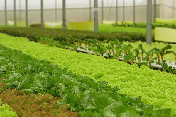 """Giá đất nông nghiệp Đà Lạt """"sốt"""" lên 70 triệu đồng/m2?"""