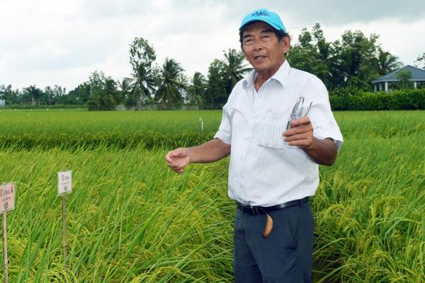 Gạo ST25 bán tràn lan, thật giả lẫn lộn, cha đẻ gạo ngon nhất thế giới 2019 Hồ Quang Cua tiết lộ điều gì?