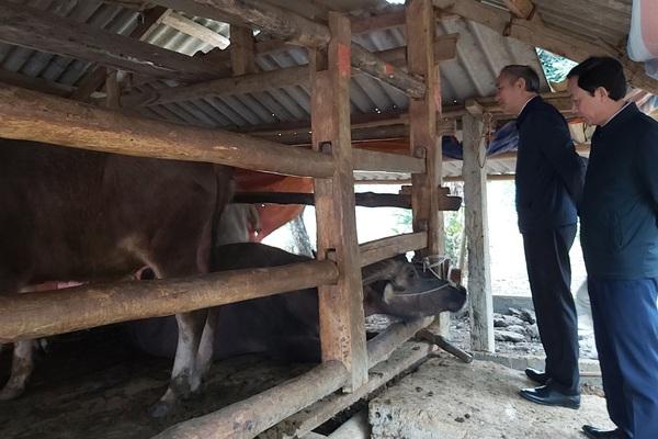 Nuôi đàn trâu con nào cũng béo tốt, ông nông dân tỉnh Hà Giang được Thứ trưởng Bộ NNPTNT khen ngợi