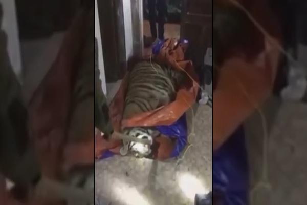Phát hiện, thu giữ con hổ nặng 2,5 tạ sắp bị nấu cao trong nhà dân ở Hà Tĩnh