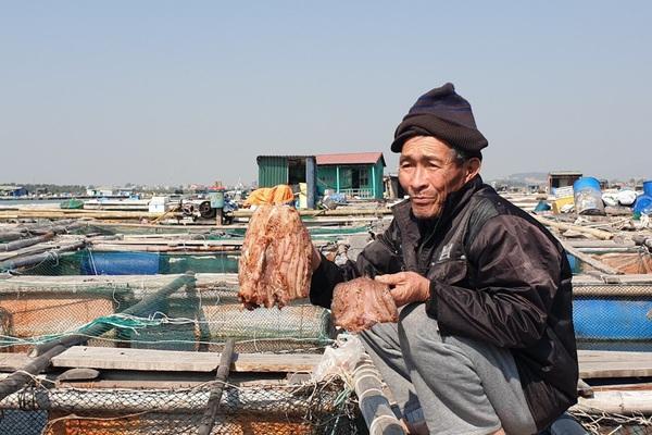 Nguyên nhân gây chết bất thường hàng tấn cá song ở tỉnh Quảng Ninh là do căn bệnh nghe tên đáng sợ này