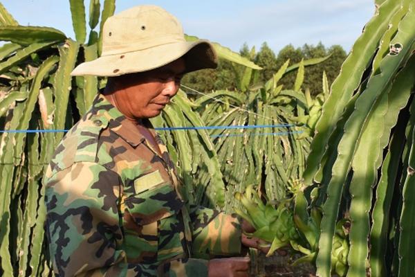 Bà Rịa - Vũng Tàu: Trời lạnh, cây ăn trái cho quả đã bé lại còn ra ít, vụ Tết nông dân sợ thất thu