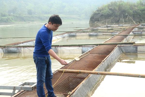 Tuyên Quang: Chịu khó ra giữa sông đóng lồng nuôi cá quý hiếm, ông nông dân này thu tiền tỷ