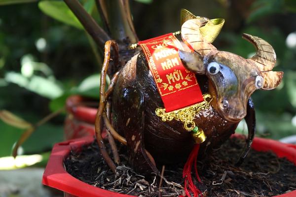 Độc đáo trâu tí hon đội cây dừa mi ni, tất cả đều bé tí ti mà hút dân mua chơi Tết Nguyên đán