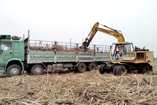 Đồng Nai: Giá mía tăng, vì sao những vùng trồng mía lớn nhất ở đây vẫn biến mất?