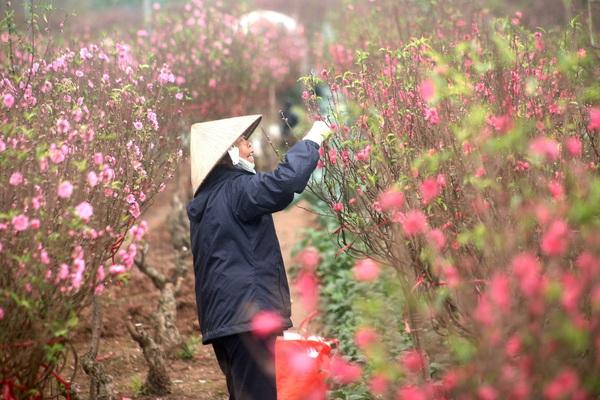 Thời tiết Tết Tân Sửu ra sao, có xảy ra mưa đá, dông lốc như năm ngoái?