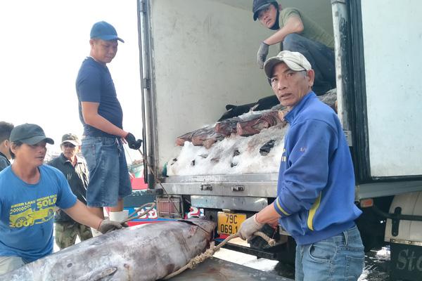 Giáp Tết, ngư dân Khánh Hòa liên tục trúng các mẻ cá ngừ đại dương, lãi hàng chục triệu đồng/chuyến