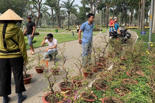 Chơi Tết cây gì: Nhà vườn mai Thủ Đức đưa mai xuống vỉa hè, chợ hoa Tết và cả trên mạng xã hội... để bán