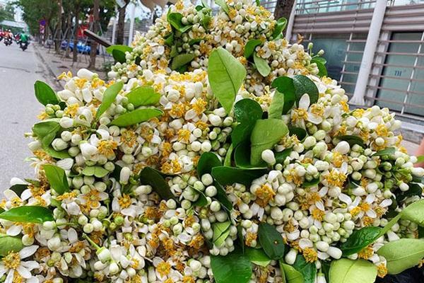 """Trước Rằm tháng Giêng, hoa tươi bất ngờ tăng giá sau đợt xuống thấp """"kỷ lục"""""""