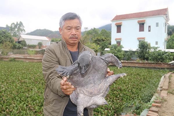 """Nuôi hàng ngàn con ba ba gai khủng, nhiều người xem """"hết cả hồn"""", ông nông dân tỉnh Sơn La lãi 2 tỷ/năm"""