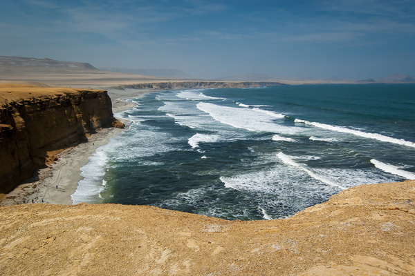 Phát hiện chất giải độc từ biển lợi hại chưa từng có