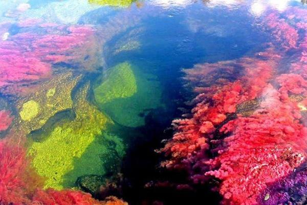 Sửng sốt trước vẻ đẹp của dòng sông ngũ sắc quyến rũ nhất thế giới