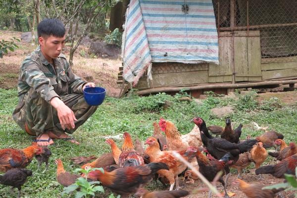 Bắc Kạn: Vô rừng vô tình bắt được gà rừng, đem về nuôi trong khe núi, ai ngờ lại bán rõ đắt hàng