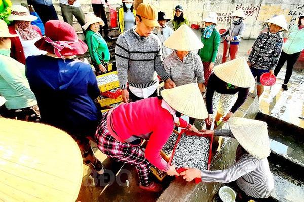 Bình Định: Loài cá cơm gì xuất hiện ngoài biển nhiều, ban đêm dân đưa trăm tàu ra đánh bắt, thương lái tranh nhau mua?