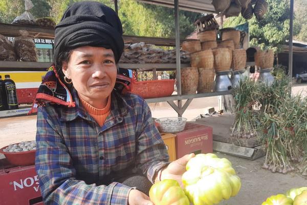 Trồng cà chua to gần bằng bát ăn cơm, nông dân thu tiền đều tay
