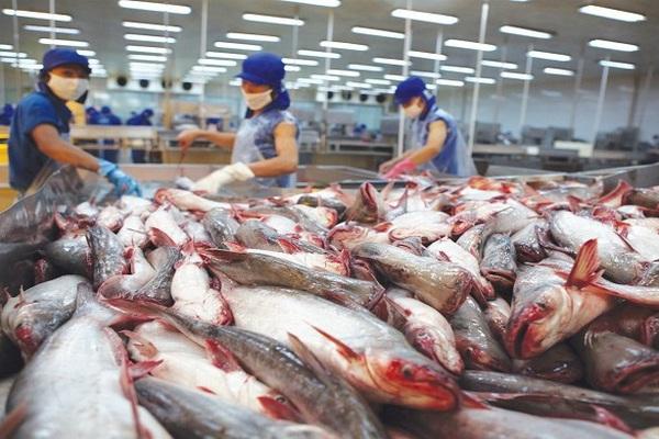 Sau khi ký kết Hiệp định UKVFTA, rau quả xuất khẩu sang Anh đạt hơn 1 triệu USD