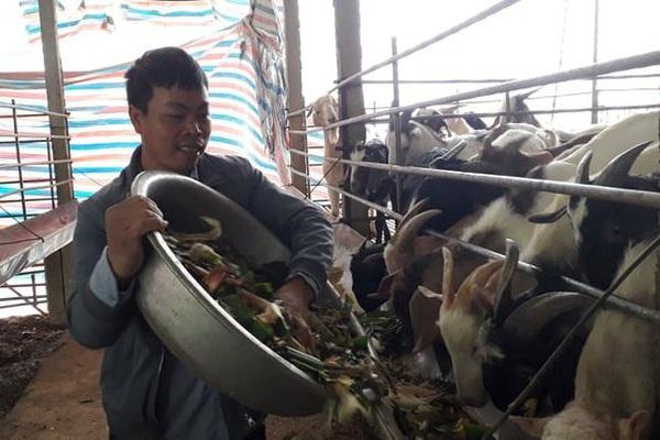 Thái Nguyên: Thất bát vì nuôi lợn, liều chuyển sang nuôi con tai dài không bao giờ đi lạc, bất ngờ lại giàu nhanh
