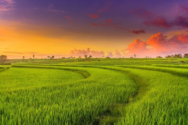 Điều kiện sang tên đất trồng lúa năm 2021