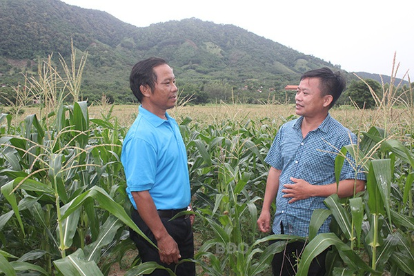 Ông nông dân Bình Định trồng cây gì, nuôi con gì mà được Thủ tướng tặng bằng khen?
