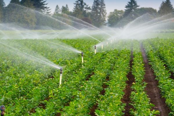 Đất nông nghiệp không sổ đỏ có được chuyển nhượng?