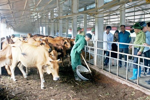 Sử dụng đệm lót, nhà nông Thái Bình nuôi bò nhàn tênh,  cuối năm bán 50 con thu gần 2 tỷ