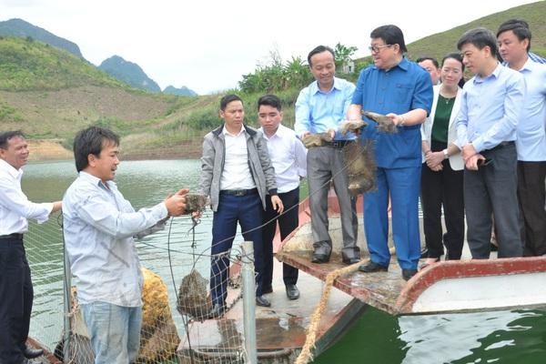"""Sơn La: Vùng sông nước, nông dân có biệt tài """"ép"""" con trai nhả ngọc, thuần phục loài cá đặc sản thu chục tỷ đồng/năm"""