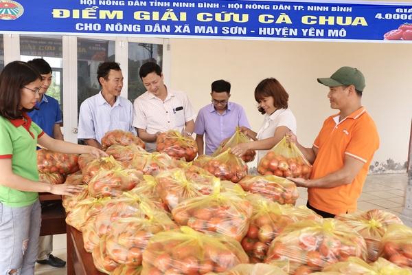 Ninh Bình: Bán 10kg cà chua chưa mua nổi bát phở, Hội Nông dân vào cuộc giải cứu