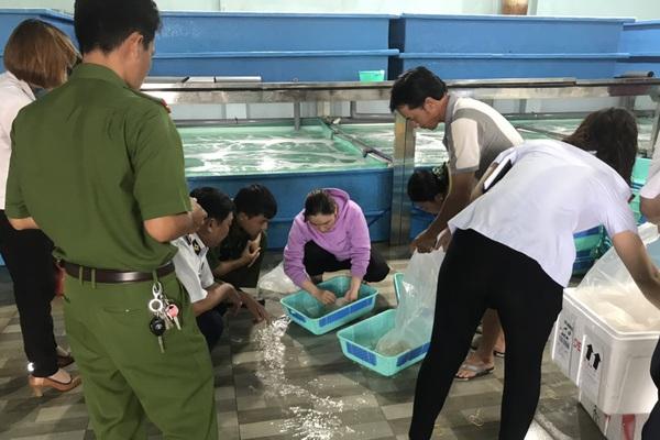 Khánh Hòa: Lực lượng chức năng xử phạt cơ sở cung cấp tôm hùm giống 15 triệu đồng