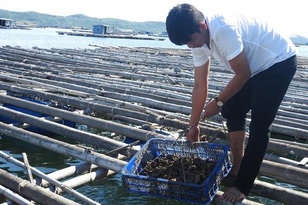 Phú Yên: Nuôi hàu giàu, nuôi ốc hương khá, nuôi 2 con trồng 1 cây trong 1 ao cũng hay, miễn là làm thế này