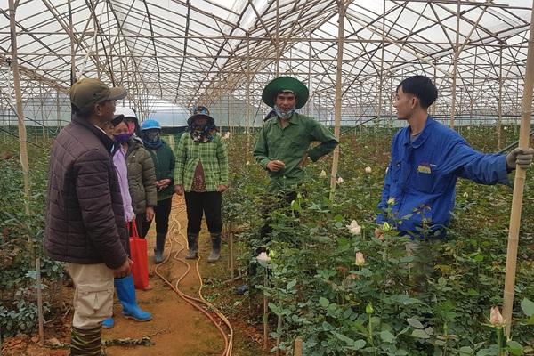 Lâm Đồng: Các doanh nghiệp đã trả tiền thuê đất cho dân, nhưng giá thuê chỉ bằng 25% giá thị trường