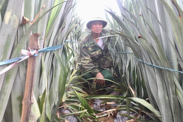 Ninh Bình: Một ông nông dân tiết lộ bí mật trong nghề trồng cây chỉ ra có mỗi một quả, trăm quả như một