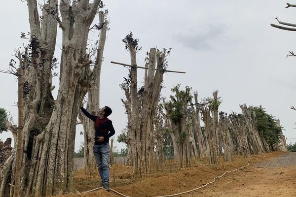 """Điều tra: Lật mặt nạ các """"phù thủy"""" hô biến những rừng cây cổ thụ! (Bài 1)"""
