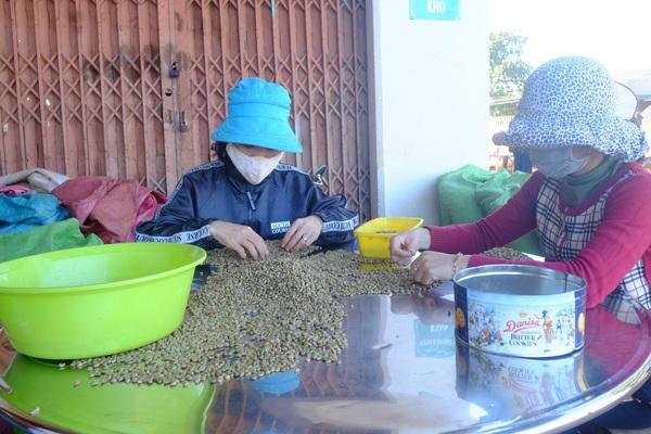 """Giá cà phê hôm nay 20/4: Giá cà phê """"nóng"""" dần do Trung Quốc tham gia mua rất nhiều?"""