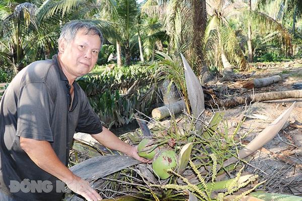 Bến Tre: Làm cách nào để giảm số sâu đầu đen hại cây dừa từ mức 100 con/cây xuống còn 17 con/cây?