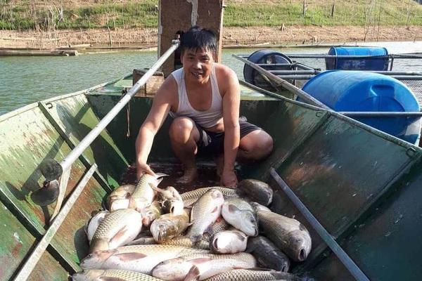 """Nghệ An: Nuôi cá lồng ở lòng hồ thủy điện, toàn loại đặc sản con to bự, nông dân """"bỏ túi"""" hàng trăm triệu đồng"""