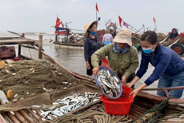 """Trung Quốc ngừng """"ăn"""", ngư dân Nghệ An đành bán rẻ """"lộc biển"""" cho thương lái"""
